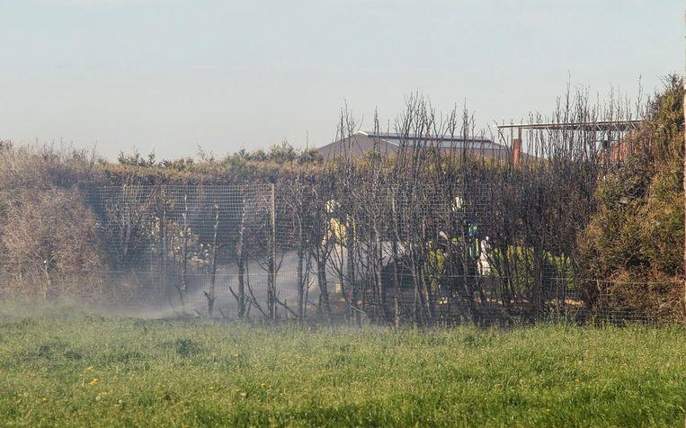 Over een afstand van tien meter brandde de haag weg.