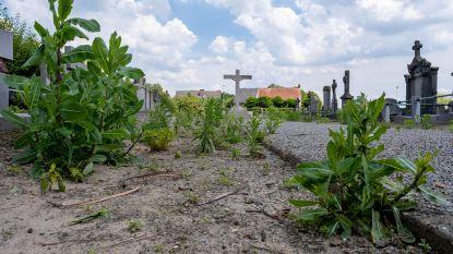 Onkruid overwoekert begraafplaats door uitblijven machine