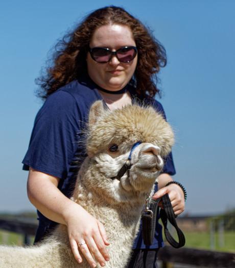 Een alpaca knuffelen? Dat kan gewoon in West-Brabant