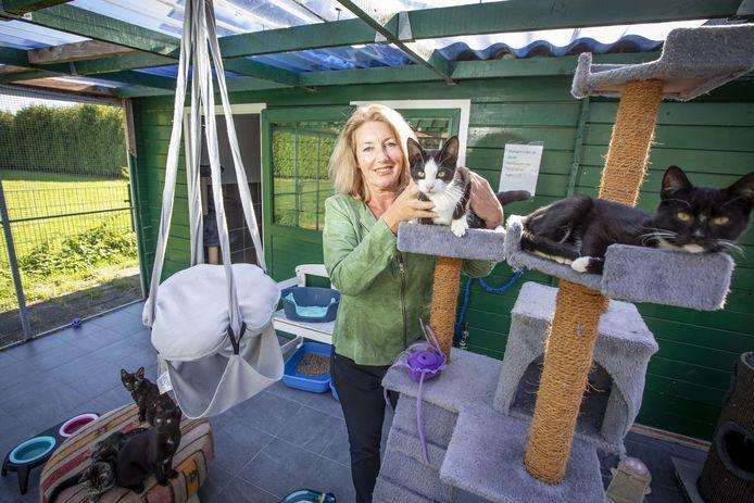 Het voormalige bestuur van DOCO, met Liesbeth van Hoorik (foto) als voorzitter, is eind vorig jaar opgestapt. Stichting Animal in Need heeft er nu de leiding.