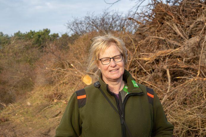 Boswachter Marijke Lieman in januari tussen de hoog opgestapelde gekapte Amerikaamse vogelkers in het duingebied bij Nieuw-Haamstede