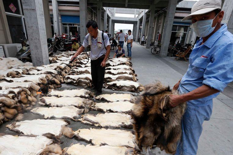 De Chinese provincie Zhejiang staat bekend om zijn export van bont, onder meer van wasbeerhonden zoals op bovenstaande foto.  Beeld REUTERS