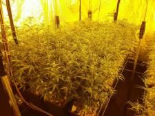 Glastuinder uit IJsselmuiden wisselt noodlijdende komkommerteelt voor wietkwekerij