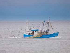 Mangerons-nous bientôt des sardines et du thon de la Mer du Nord?