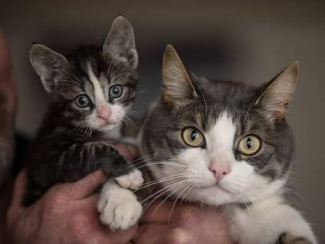 Verwaarloosde kitten Daan is klaar om te gaan, maar hij kan blijven