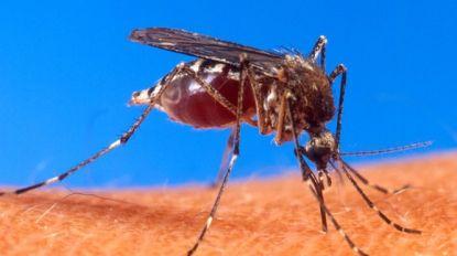 Tijgermuggen reizen mee met vakantiegangers via Route du Soleil