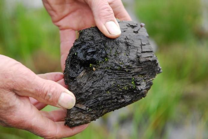 De graafmachines waren nog niet weg of de natuur, in dit geval deze biezen, schoten uit de grond. ;Een verkoold stukje boomstam uit het moeras van de Drenck. ;Boswachter Jan Hop van Brabants Landschap laat zien wat voor waterplanten er groeien op de moerasachtige bodem van de Drenck. foto's BN/DeStem ;'Lijk' van een dode boom in het natuurgebied De Pannenhoef. ;Het beekje de Bijloop baant zich een weg door de Pannenhoef.
