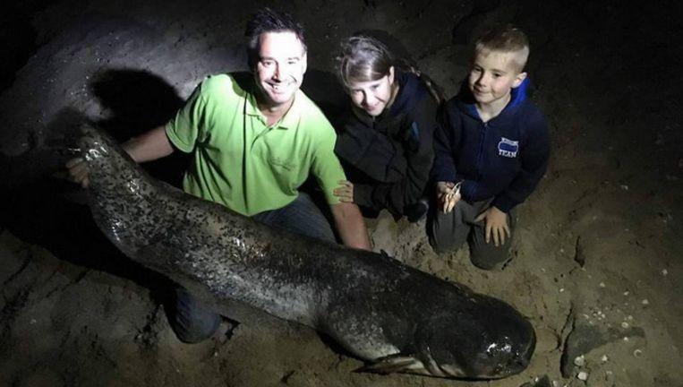 De meerval van 1,79 meter groot. Het duurde tot 23 uur voor ze het dier op het droge konden krijgen.