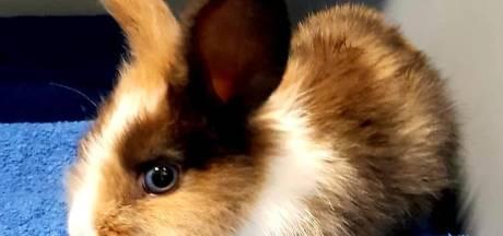 Levend babykonijn met pootjes aan elkaar getapet in vuilnisbak gedumpt: 'Onmenselijk!'