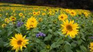 Koop voordelig een bloemenmix