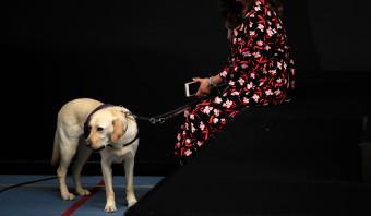 'Maak wettelijke regels voor activiteiten met dieren'