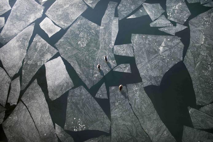 Eenden laten zich meedrijven op ijsplaten op het water van het  Wannsee-meer in Berlijn. Foto Ralf Hirschberger