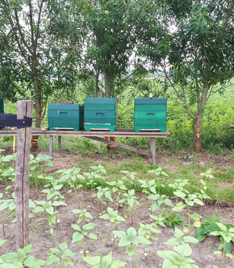 Zeer opmerkelijke diefstal in Raalte: kasten gevuld met 250.000 bijen gestolen