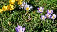 Provincie verdeelt 10.000 zakjes gratis bloemenzaad