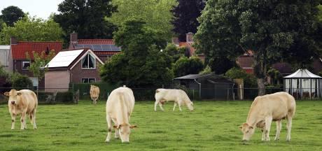 Koeienkwestie in Riel weer voor de rechter: 'Had het college van Goirle geen sorry kunnen zeggen?'