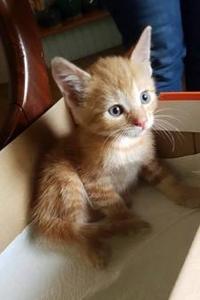 Kitten te vondeling gelegd voor deur in Doesburg