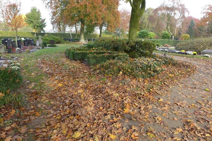 Herfstbladeren op de begraafplaats in Boxtel.