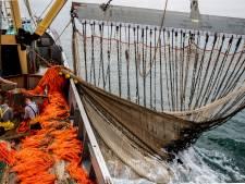 Uitstel pulsvisverbod voor ruim veertig Nederlandse kotters