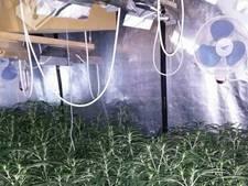 Man opgepakt bij wietkwekerij met 811 planten in Druten