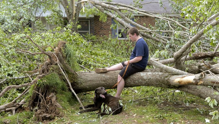 Een omgewaaide boom in Alabama Beeld ap