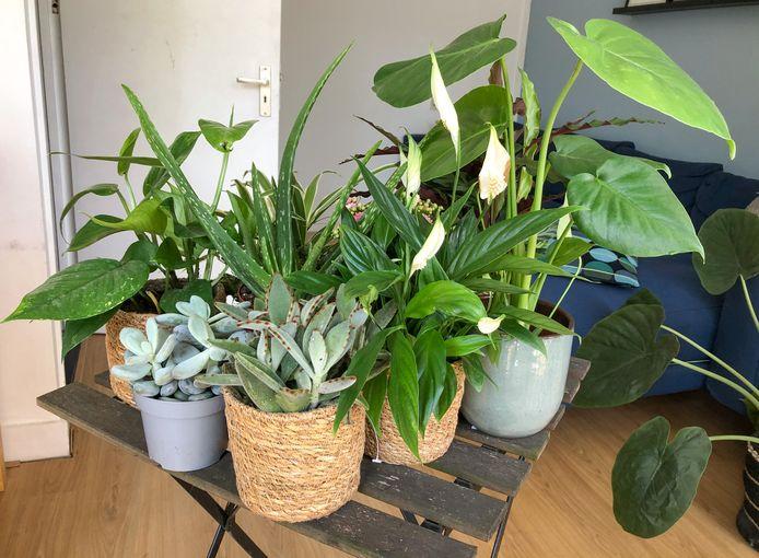 De Kneusjesboxen zijn gevuld met negen tot 11 verschillende plantjes.
