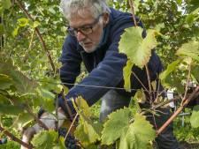 Vrijwilligers houden wijn uit Bentelo betaalbaar