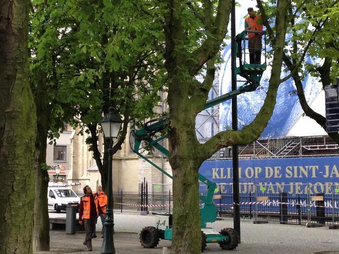 Medewerkers van de gemeente onderzoeken de bomen.