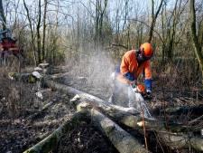 Zieke bomen uit Lingebos op te halen als haardhout