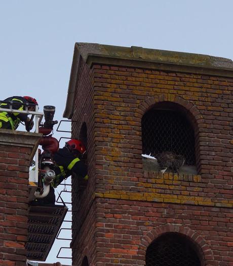Poes Angel kruipt in toren en komt vast te zitten; brandweer redt beestje