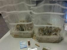 Wildkampeerders met drugs in auto gepakt