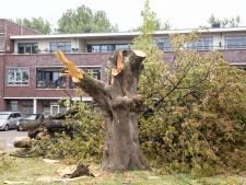 Gemeente Baarn kapt 138 'gevaarlijke' bomen die slechte conditie hebben of dood zijn