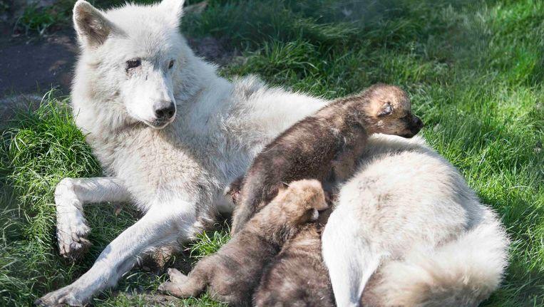 Moeder met kinderen. Beeld Amber Dekker