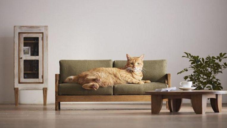 Kattenliefhebbers opgelet: deze prachtige meubels mogen niet ...