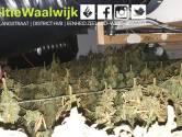 Hennepkwekerij met ruim 200 planten gevonden in woning Waalwijk