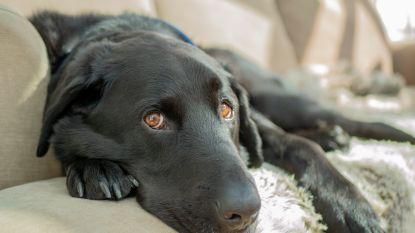 """Net op warmste dag ooit moet politie hond bevrijden uit snikhete wagen: """"Hond verkeerde in levensgevaar"""""""