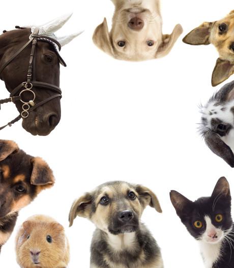 Dierenartsconsult in coronatijd: videobellen over de kale plekken van je kat