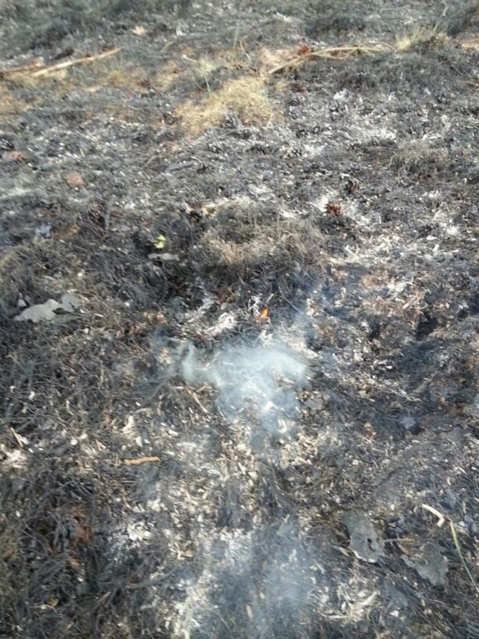 De verbrande heide op de Veluwe.