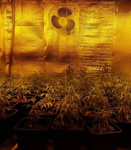 Hennepkwekerij met 80 planten gevonden in Ewijk