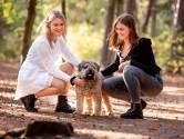 Onderzoek naar dood van hondje Woezel nog steeds niet afgerond: Dader komt uit Almelo