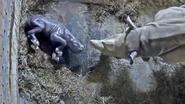 VIDEO: Zeldzame zwarteneushoornbaby Kendi maakt kennis met mama