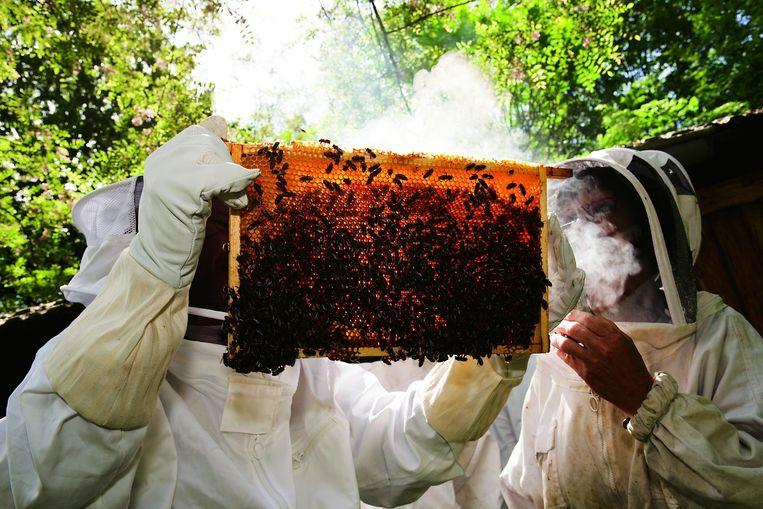 Imkers met een raam met bijen. Beeld Lilian van Rooij