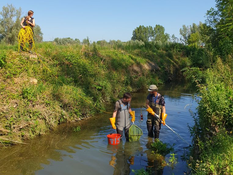 Bevissing Molenbeek
