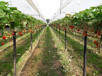 Politiek Zundert breekt met succes lans voor fruittelers