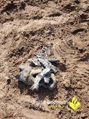 De scherven van de bom nadat die op de heide veilig tot ontploffing was gebracht.