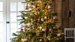 Tien om te zien: kies de kerstboom die het beste bij je past