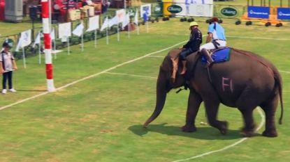 In Bangkok spelen ze olifantenpolo voor het goede doel