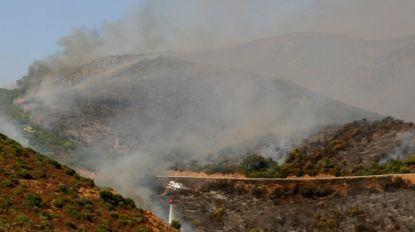 Kurkeiken Sardinië in gevaar door bosbranden, minstens 20 jaar voor herstel