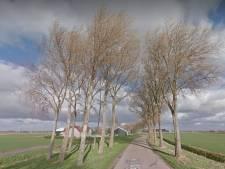 Verzet tegen massale kap 'watersnoodbomen' langs de Drieëndijk bij Heenvliet