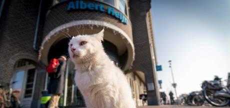 Albert Heijn-kat Pasja is onderwerp van gesprek in Elst
