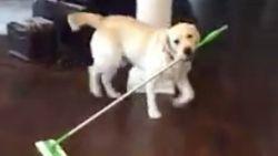 VIRAL3: Propere hond dweilt